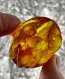 Golden Orange Amber Freeform