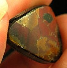 Red Fire Russian Ammolite Cabochon :: Image is of piece for sale.